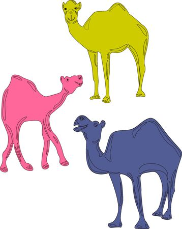 A family of charming multi-colored camels