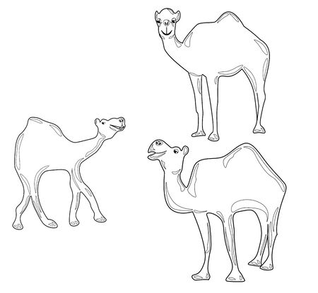 Silhouettes of three camels