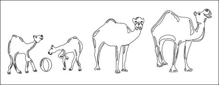 Contour image of three camels on a walk Ilustrace