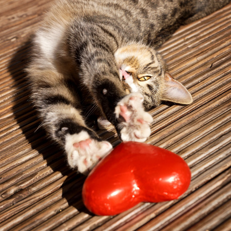 sweet cat with red heart  Standard-Bild