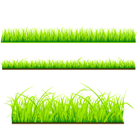 fresh grass vector template