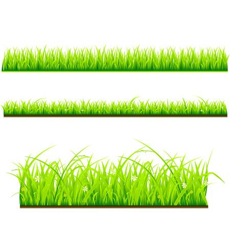 fresh grass vector template