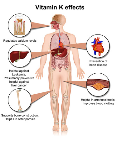 Ilustración de vector médico 3d infeccioso de vitamina K sobre fondo blanco