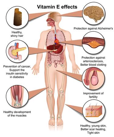 vitamin e effects infographic 3d medical vector illustration on white background Illustration