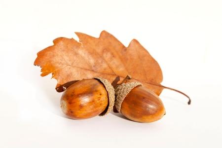 Oak Leaf en de eikel Stockfoto