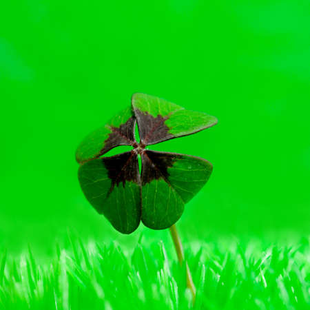 four leafed: four leaf clover in the grass  Stock Photo