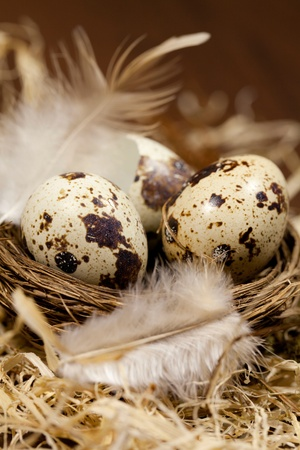 small nest with eggs photo