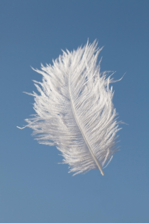 zero gravity: White feather falling in the blue sky