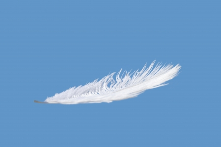 falling feather: floating feather Stock Photo