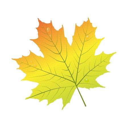 autumn leaf frame: Hoja de arce Vectores