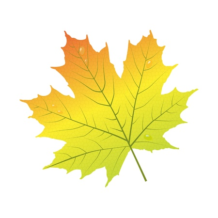 autumn leaf frame: Maple leaf