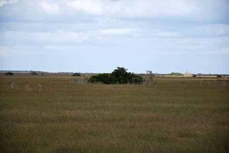 Landscape in Everglades National Park, Florida