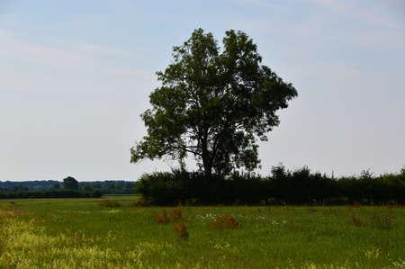 Landscape at the River Alte Leine, Ahlden, Lower Saxony