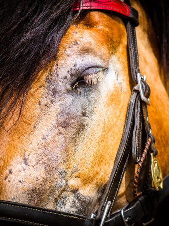 the horse has a lot of fly in the eye Imagens - 95161068