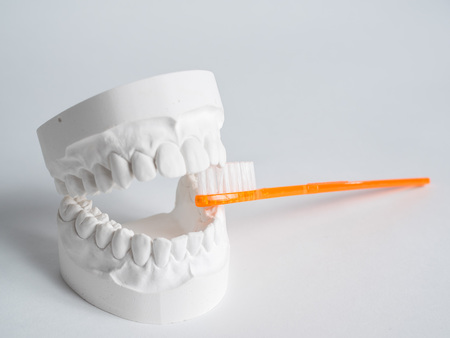 Oral hygiene health concept close up orange toothbrush in dental gypsum model plaster isolated