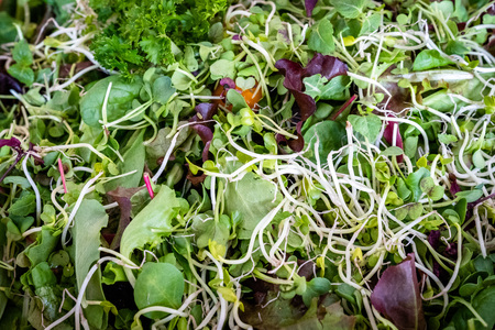 mixed salad with bean sprouts, taken from above, without dressing