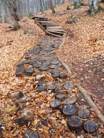 trailway: Wooden trailway in the forest