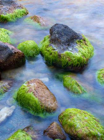 Stones an der Küste mit Algen Standard-Bild
