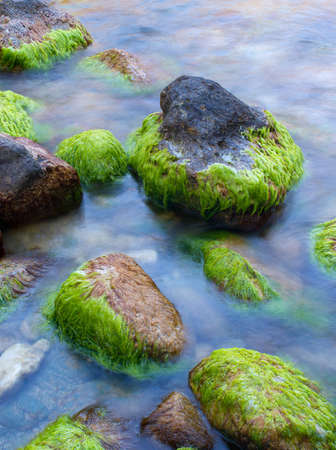 Stones on the seashore with algae
