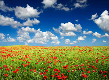 Field with poppy and clouds