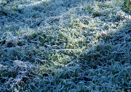 Rime on the grass photo