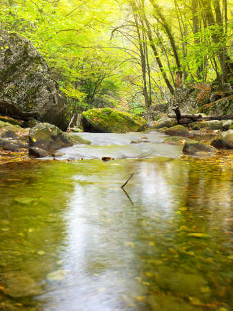 Lake in the forest 写真素材