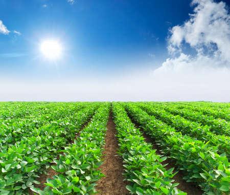 Líneas verdes en el paisaje agrícola de campo Foto de archivo - 22111956
