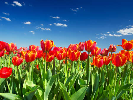 colorize: Bright flowers on the sky background Stock Photo