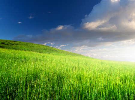 Agricultural landscape photo