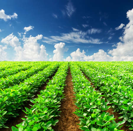 Rows on field  Agricultural landscape Stock Photo