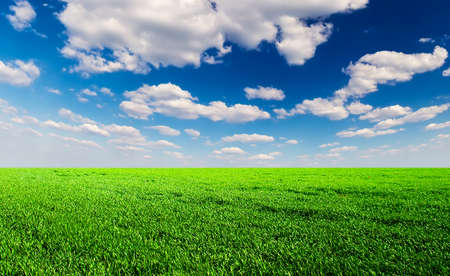 Field and clouds. Agricultural landscape photo