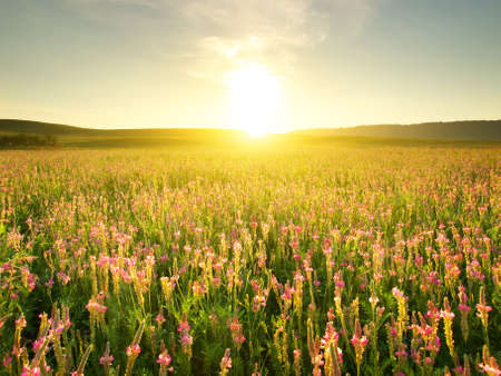 Field and sun glow  Agricultural landscape