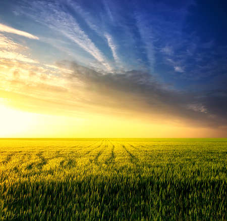 agriculture landscape: Field during sunset. Agricultural landscape Stock Photo