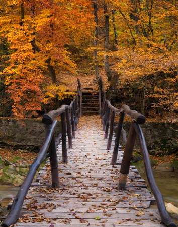Walkway in autumn forest. Beautiful natural landscape