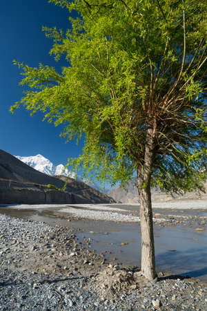 nepali: Tree in mountain valley in Nepali. Beautiful natural landscape