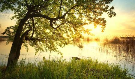 日没時に湖の近くの木。美しい自然の風景