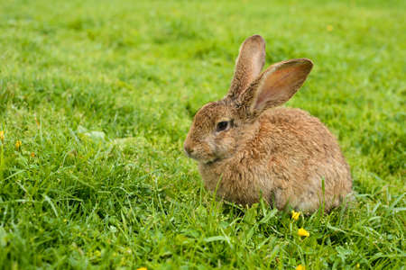 Rabbit on grass. Composition with animals Stock Photo