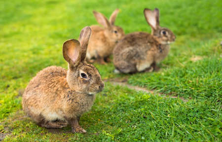 Kaninchen auf Gras. Tier Zusammensetzung