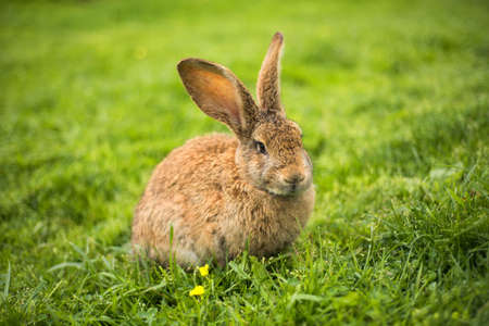 Rabbit on grass. Animal composition Foto de archivo
