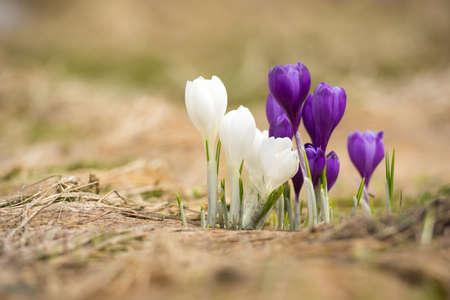 � spring: Flores de primavera como un fondo Foto de archivo