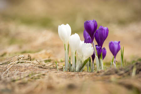 spring: Spring flowers as a background