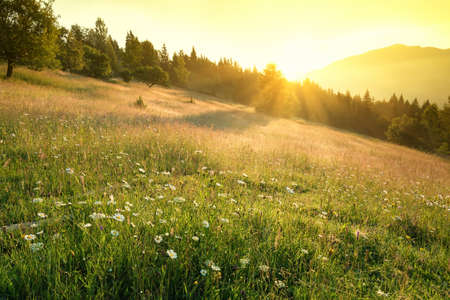 Field in mountains during sunrise. Natural landscape