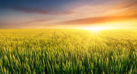 Filed during bright sunset. Agricultural landscape Foto de archivo