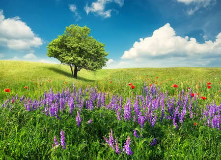 landscape: Tree on the flowers field. Beautiful summer landscape