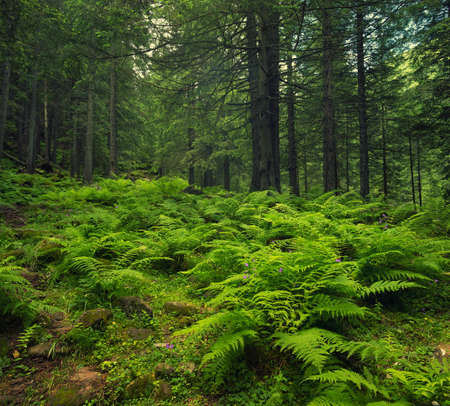 pine forest: Forest as a background in summer time. Natural summer composition