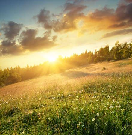 summer: El campo en las montañas durante el amanecer. Paisaje natural