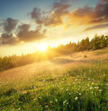 meadows: Field in mountains during sunrise. Natural landscape