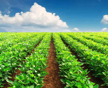 organic farm: Rows on field. Agricultural composition Stock Photo