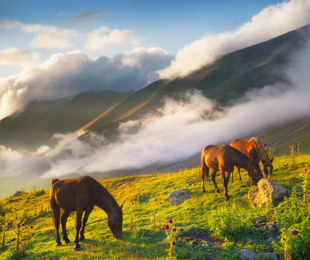 Caballos en el valle de montaña. Hermoso paisaje natural con animales Foto de archivo