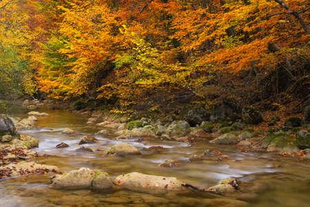 Weg in de herfst bos. herfstlandschap